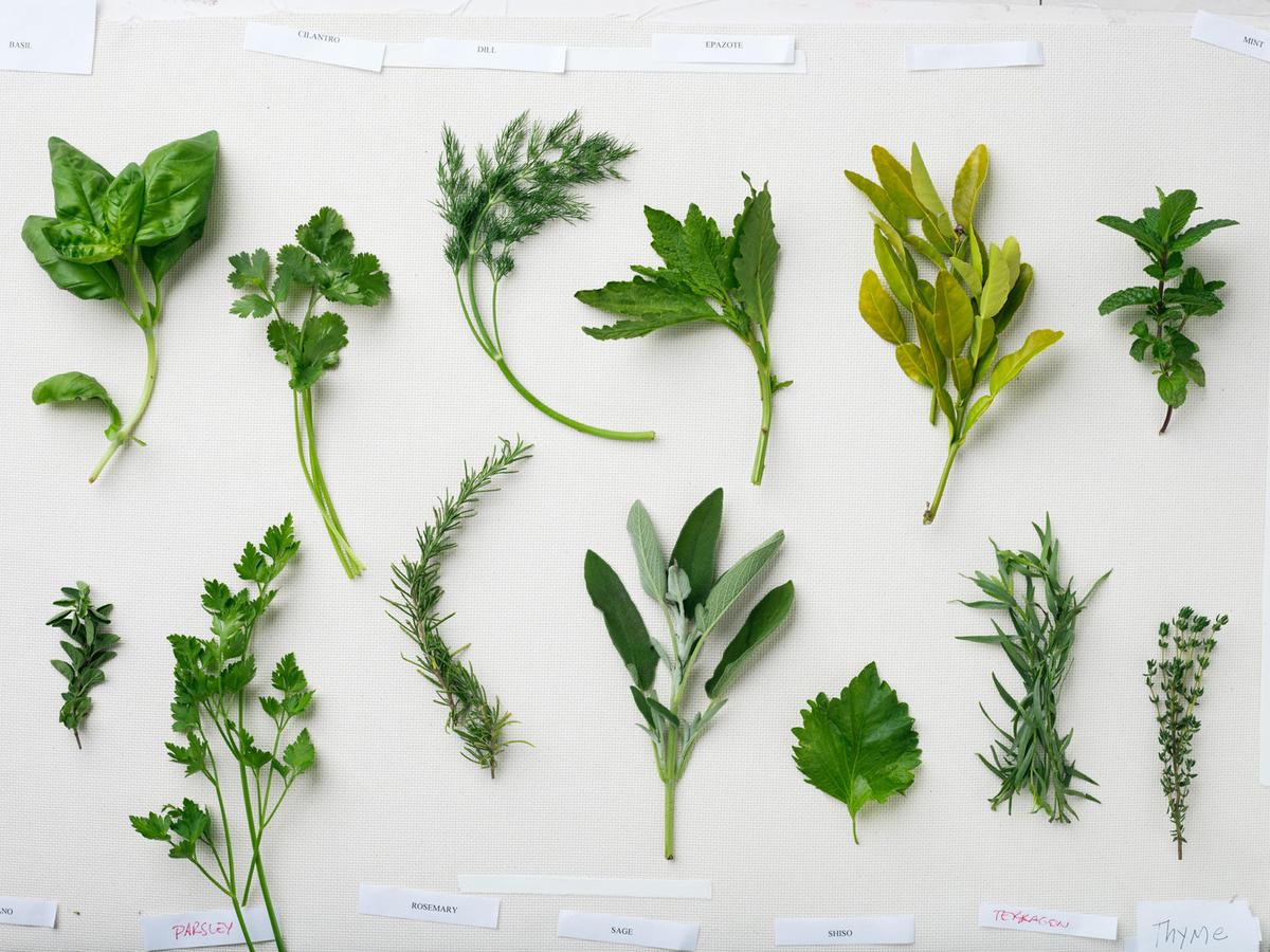 global herbs basic thyme 0313